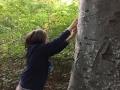 Waldgesichter-1