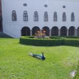 SoLa20_Tirol_028