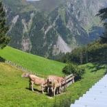 SoLa20_Tirol_104
